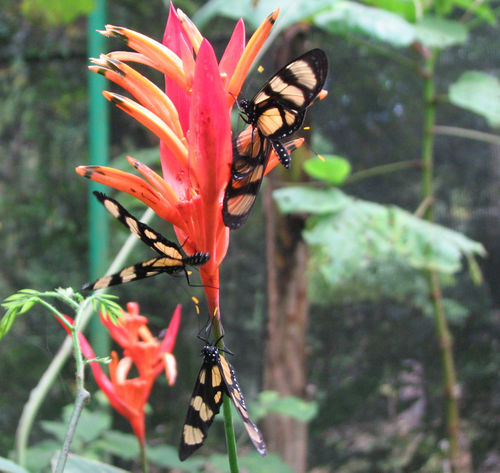 Butterfly house 1a