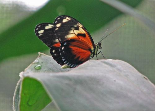 Butterfly close-up adj