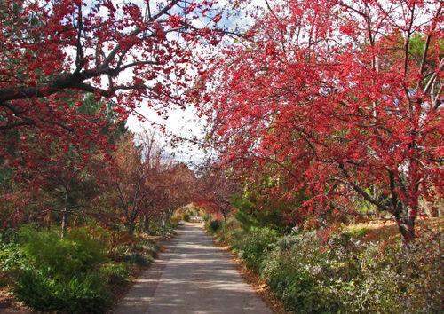 Berry bright path