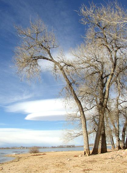 beach_cottonwoods_and_lenticular_clouds.jpg