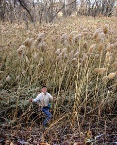 bl2_bob_in_the_tall_grass.jpg
