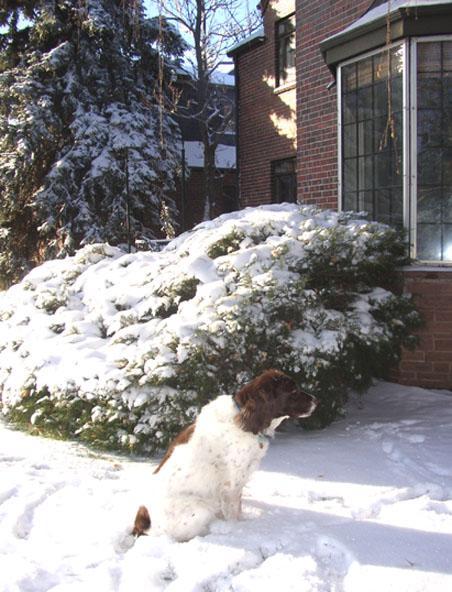 copper_sitting_in_snow.jpg