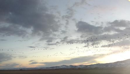 cranes_sky_full.jpg