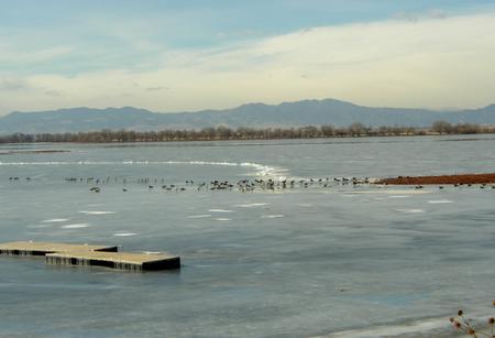 geese_on_ice.jpg