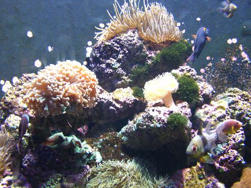 Coral_reef_in_td