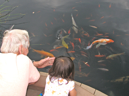 Koi_watchers