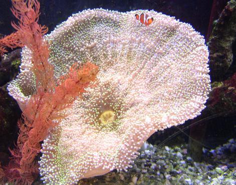 Nemo_found_1