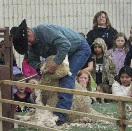 Shearing_1