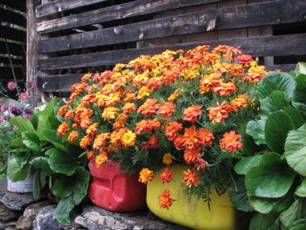 Simple_flower_garden