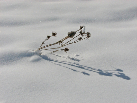 Snow_shadowsen