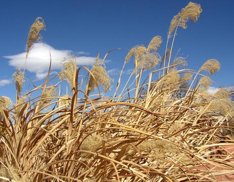 Winter_grasses