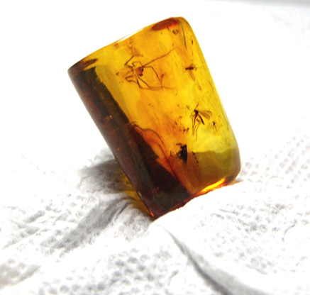 insects_in_amber.jpg