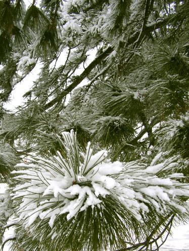 march_snow_009.jpg