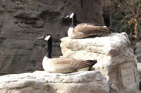 two_geese.jpg