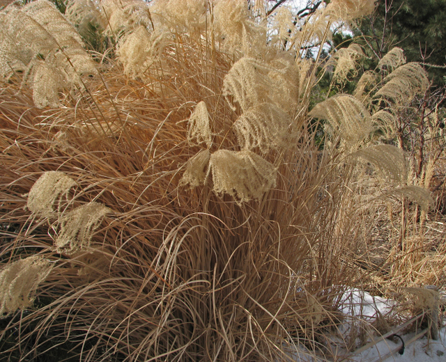 grasses_and_snow.jpg